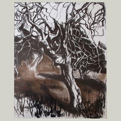 """""""Alberi"""" 1967 carboncino e gessetto su carta cm50x35"""